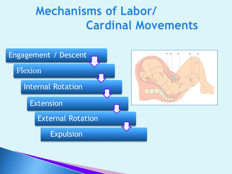 Mechanisms of Labor/ Cardinal Movements