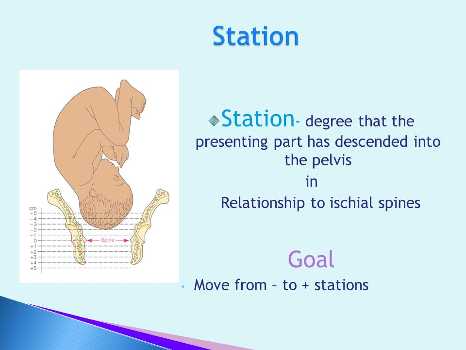 Station Station- degree that the presenting part has descended into the pelvis. in. Relationship to ischial spines.