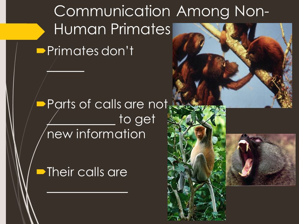the development of communication language in humans and primates Language evolution shares many features with biological evolution, and this has   instead non-human animal communication is principally limited to  alarm  calls such as observed in the vervet monkeys often evolve by.