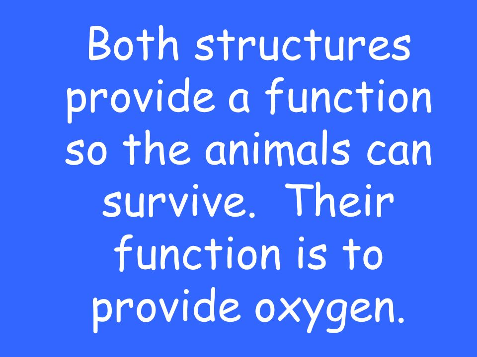 Both structures provide a function so the animals can survive