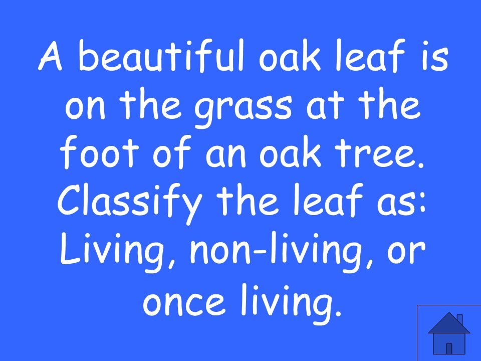 A beautiful oak leaf is on the grass at the foot of an oak tree