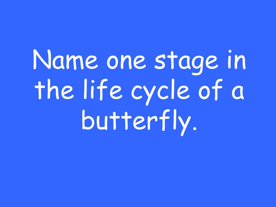 Name one stage in the life cycle of a butterfly.