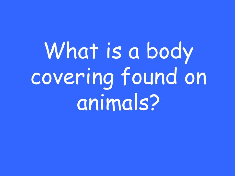 What is a body covering found on animals
