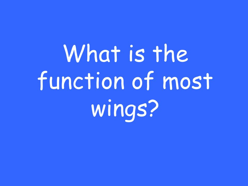 What is the function of most wings