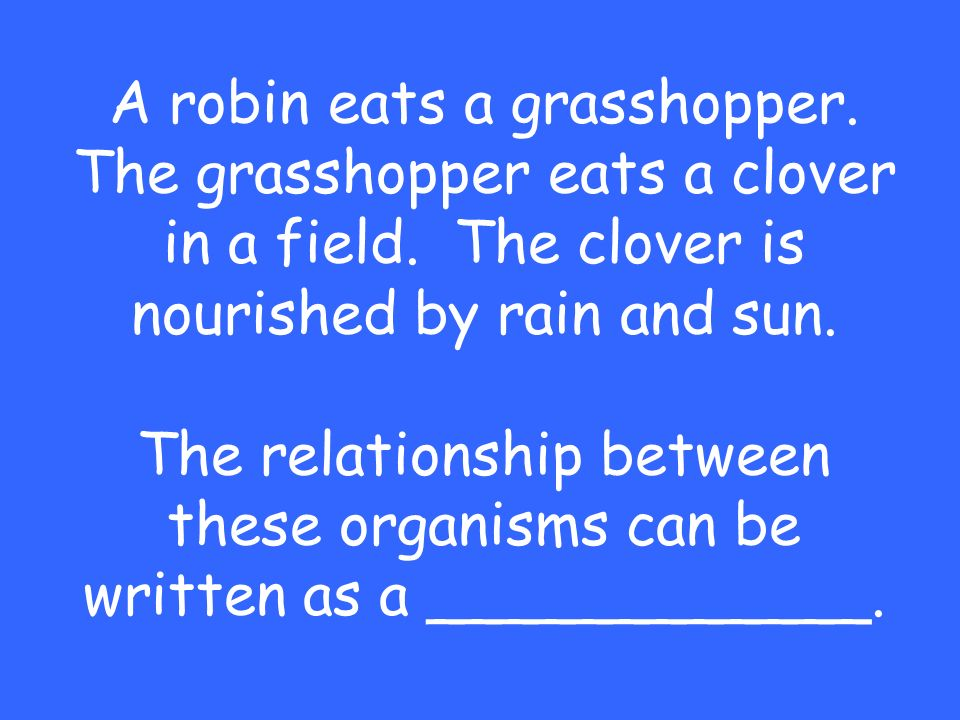 A robin eats a grasshopper. The grasshopper eats a clover in a field