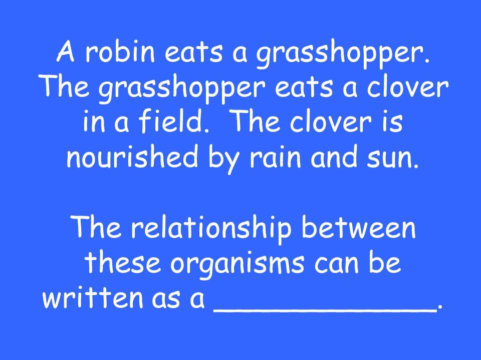 A robin eats a grasshopper. The grasshopper eats a clover in a field