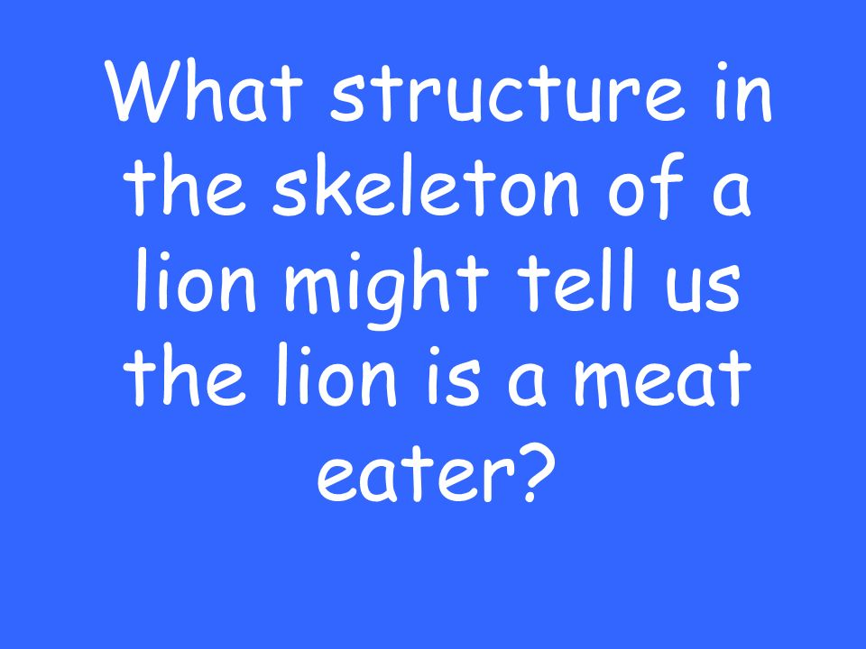 What structure in the skeleton of a lion might tell us the lion is a meat eater