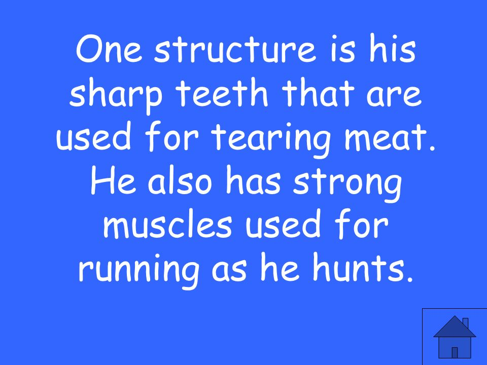One structure is his sharp teeth that are used for tearing meat