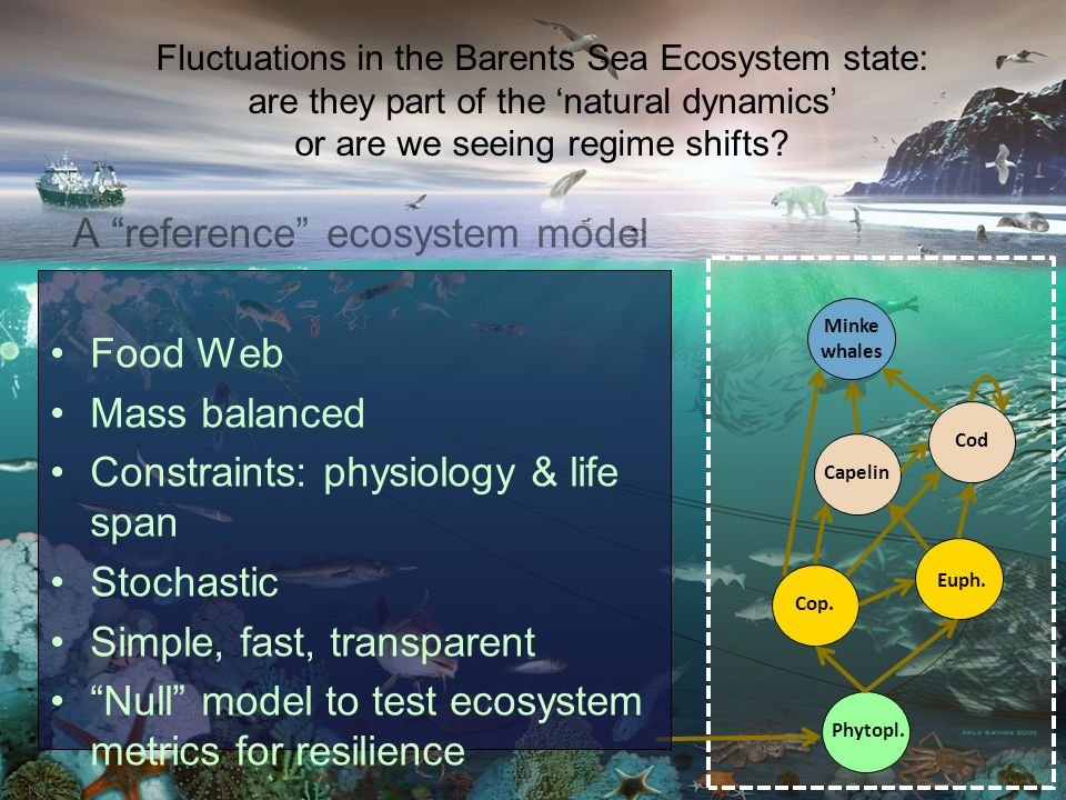 A reference ecosystem model Food Web Mass balanced