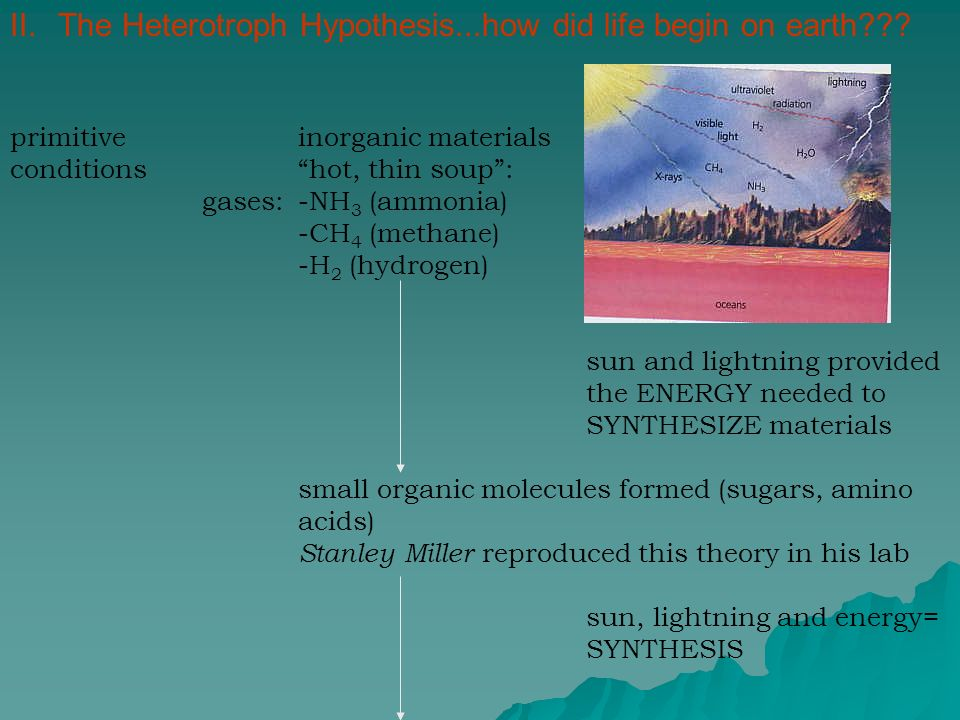 heterotroph hypothesis According to the heterotroph hypothesis, the first living organism was a heterotroph which performed anaerobic respiration (respiration without oxygen) these heterotrophs created carbon dioxide (co2) whch later became an abundance on earth.