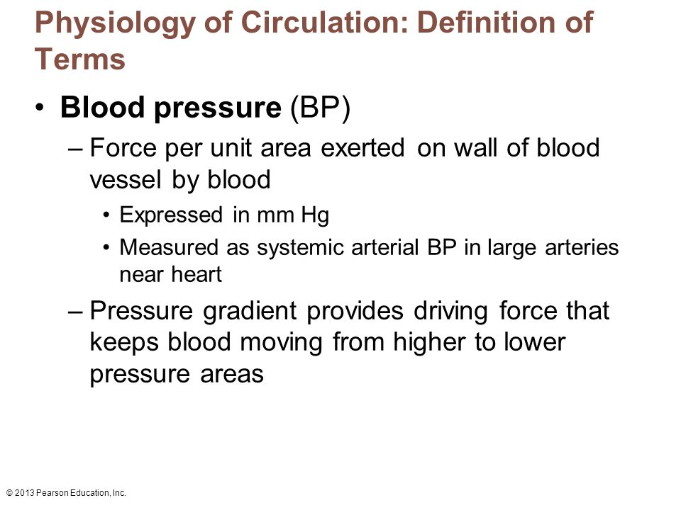 19 The Cardiovascular System: Blood Vessels: Part A.
