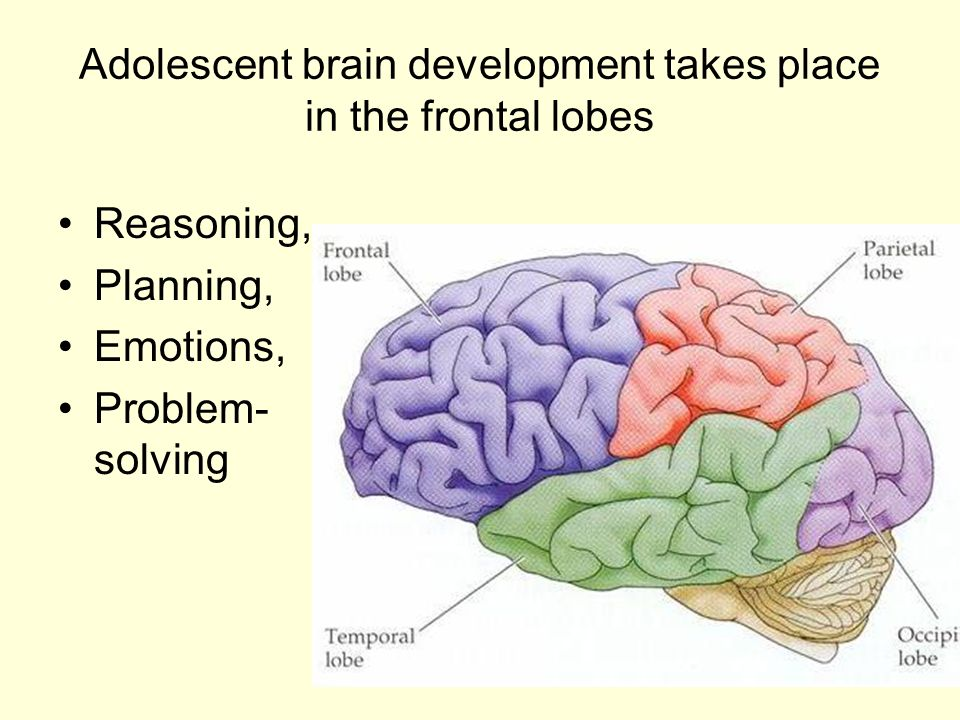 adolescence brain development From birth onward, the human brain continues to develop and mature for  adolescents, the amount of information they can process continues.