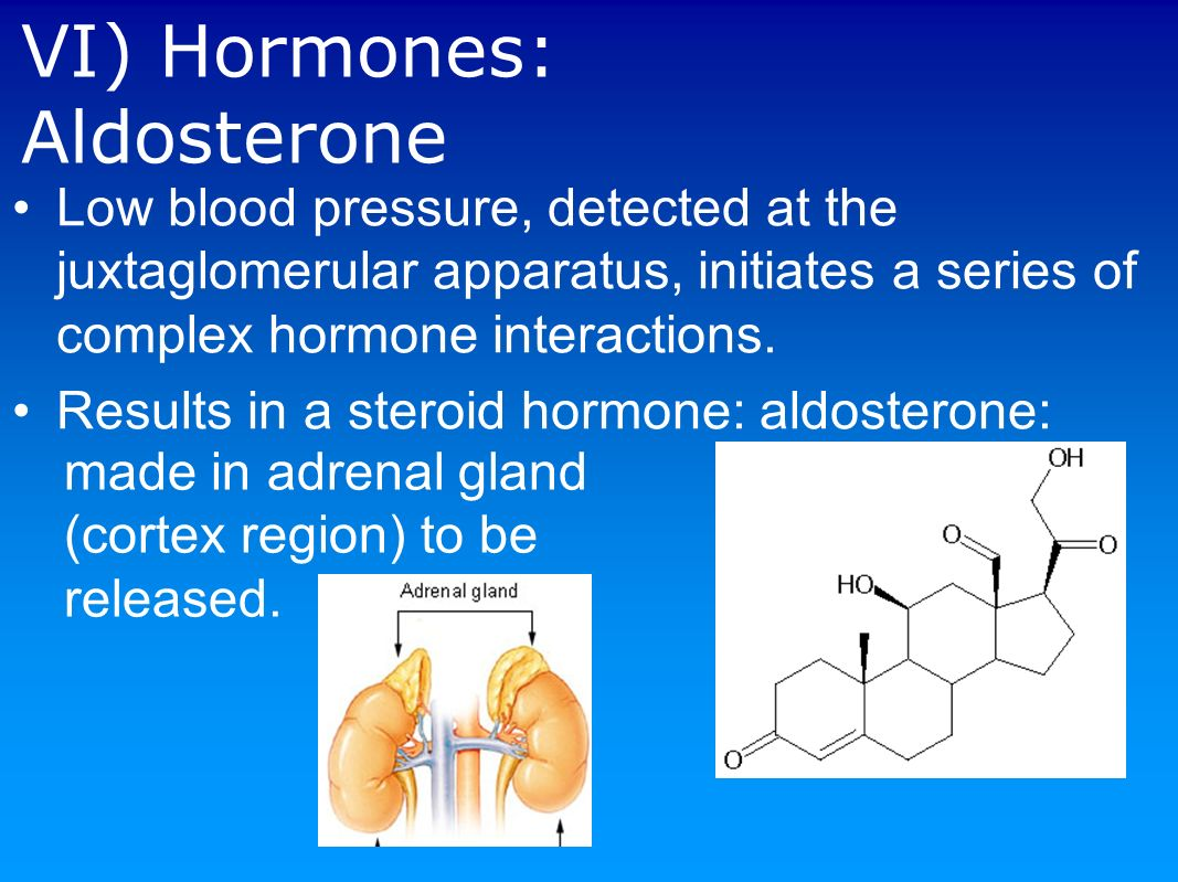 does adh favor the formation of dilute or concentrated urine The urine concentration, then it says that adh makes adh and aldosterone help us in of adh thus leading to increased dilute urine.