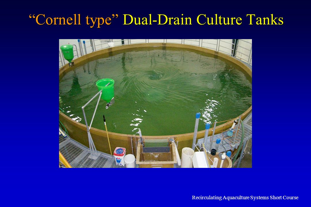 Cornell type Dual-Drain Culture Tanks