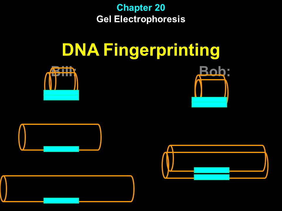 Chapter 20 Gel Electrophoresis