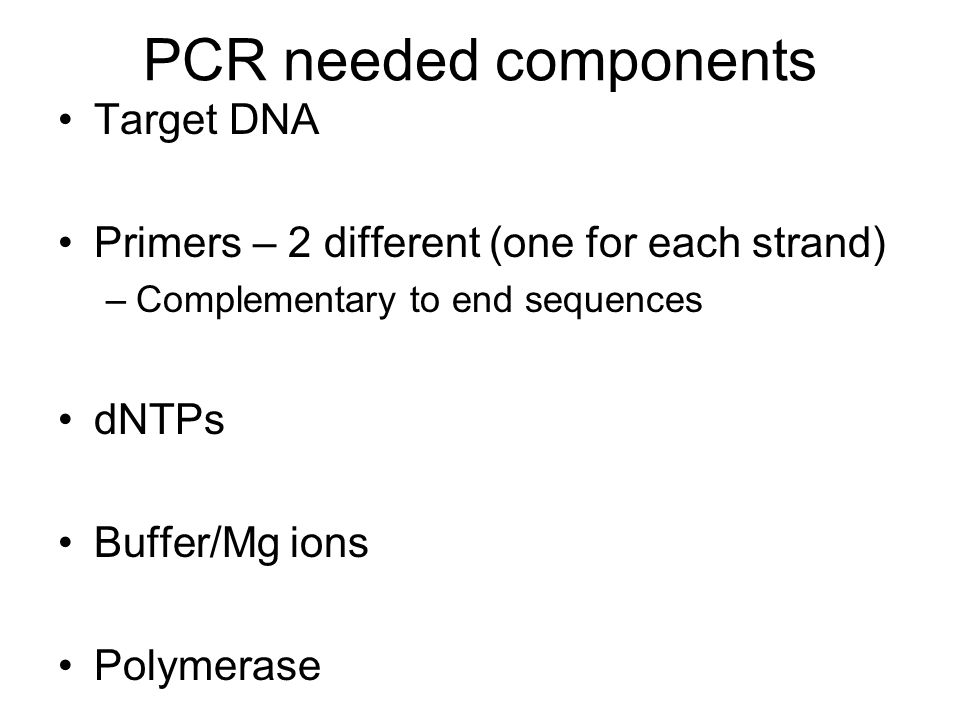 PCR needed components Target DNA