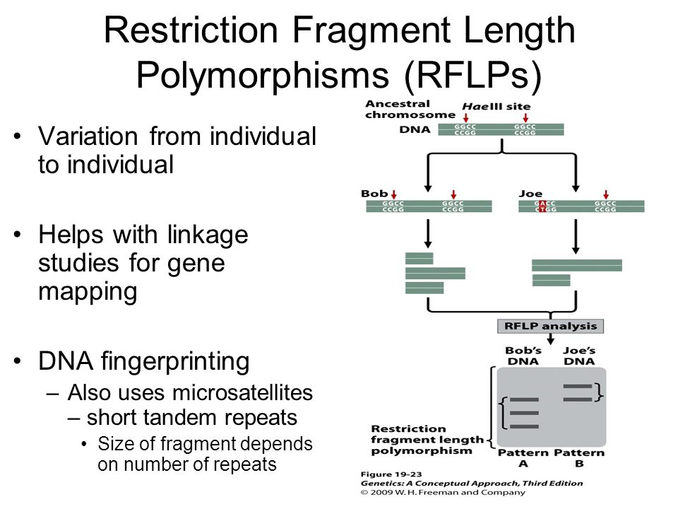 Restriction Fragment Length Polymorphisms (RFLPs)