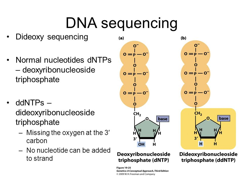 DNA sequencing Dideoxy sequencing