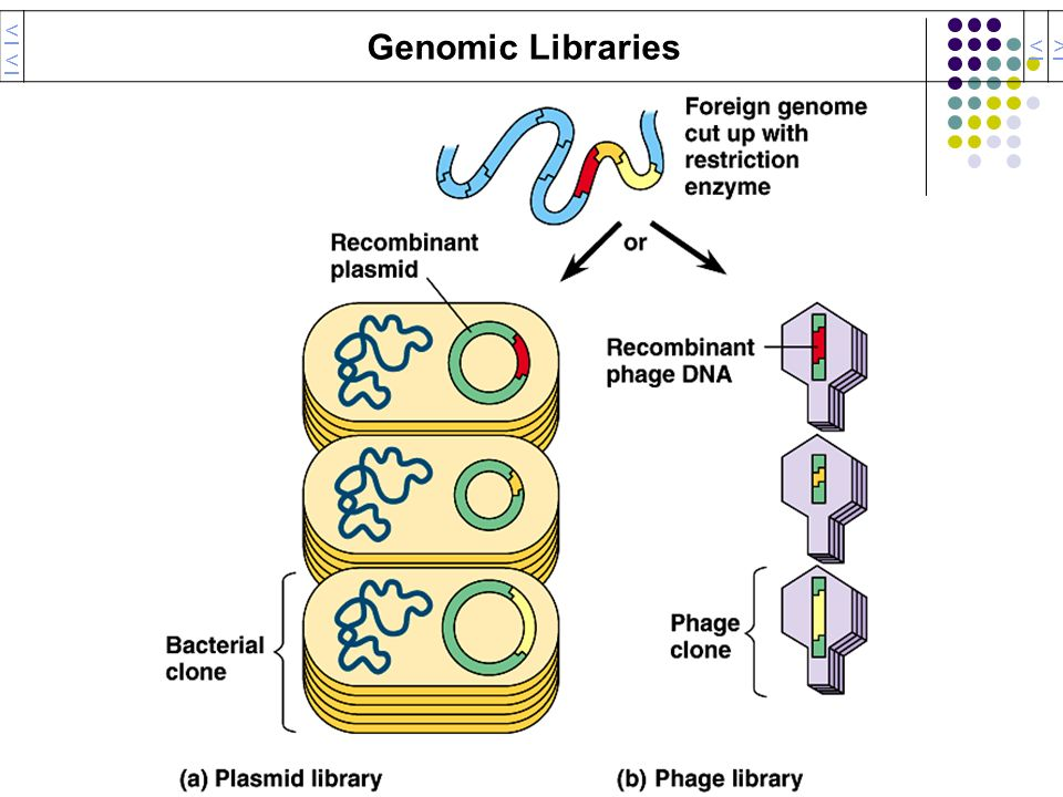 << Genomic Libraries < >