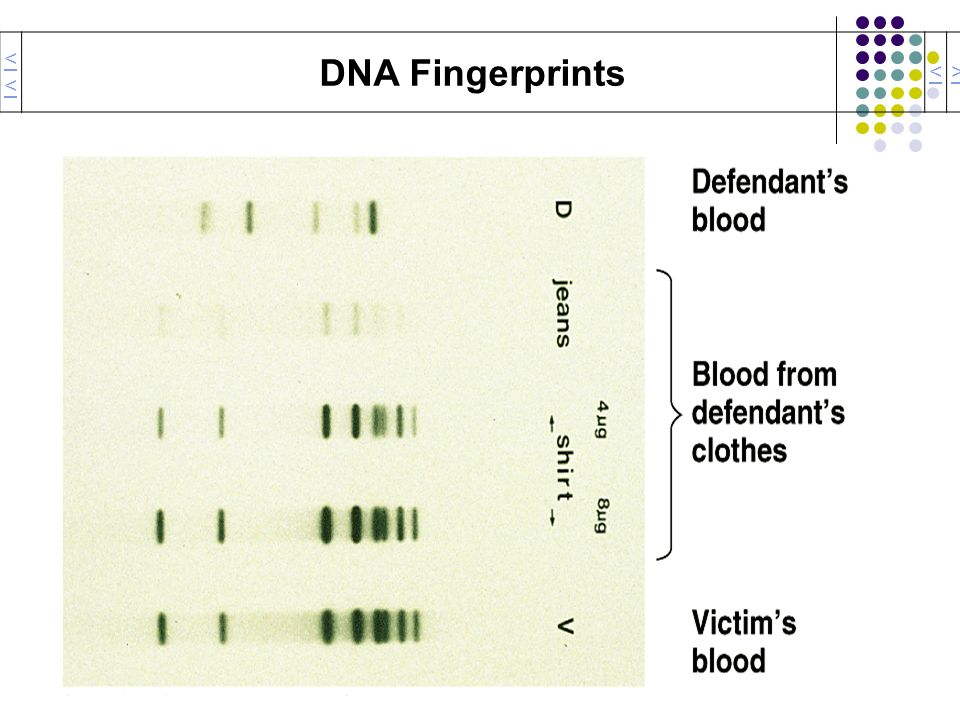 << DNA Fingerprints < >