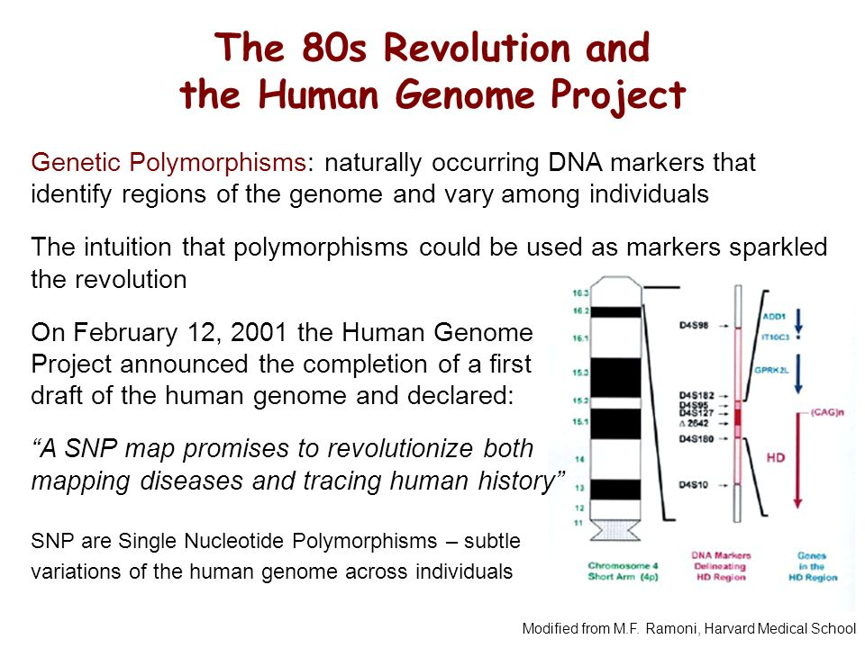 human genome project launched to map mans basic composition The book that launched a application of techniques developed in the human genome project to species identification and (using the full genome map).