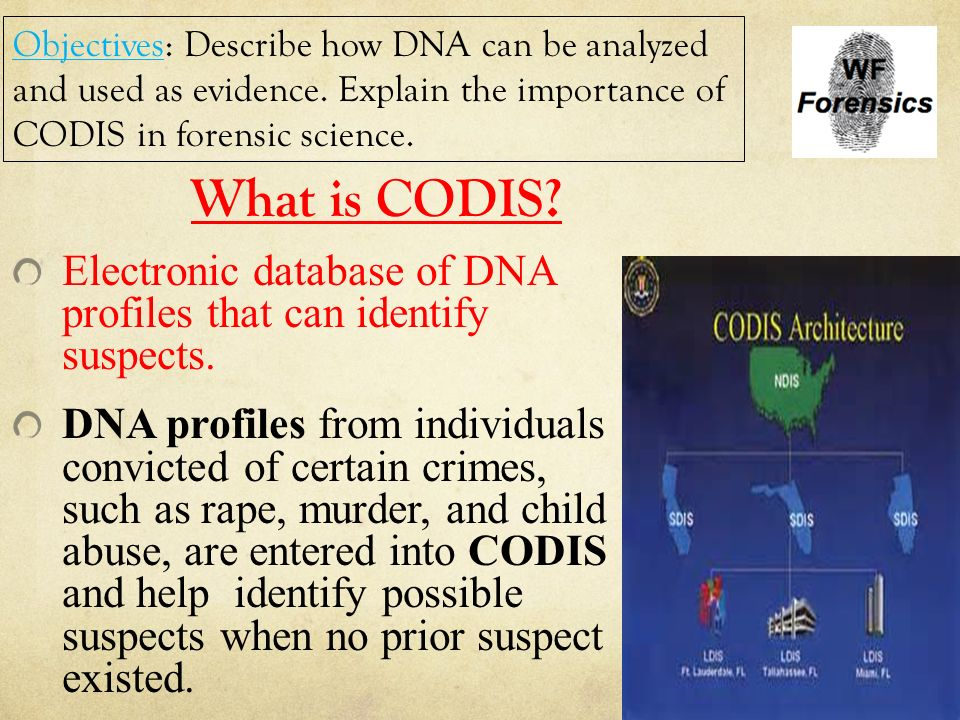 a description of dna fingerprinting and its role in solving murder cases When the dna results came back, even lukis anderson thought he might have   with a nine-paragraph paper titled dna fingerprints from fingerprints  the  only explanation: the participants unwittingly brought with them alien  and it  worked: in those forensically aware cases, police solved the case.