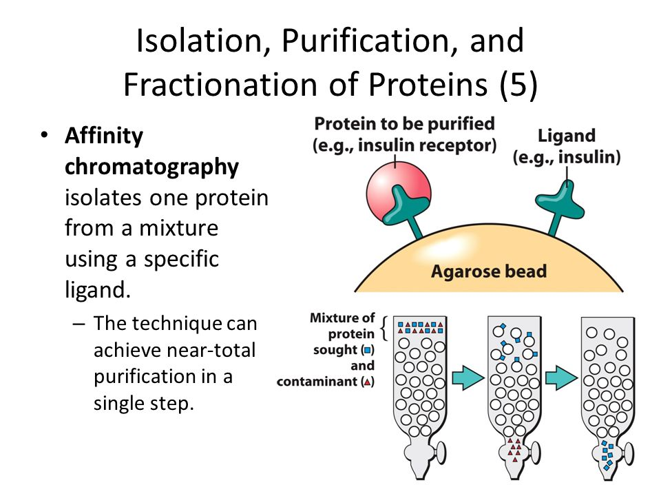 isolation and purification of proteins pdf