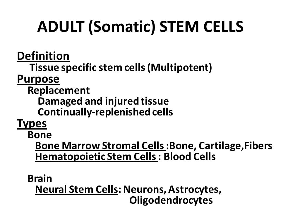 Adult Somatic Cells 21