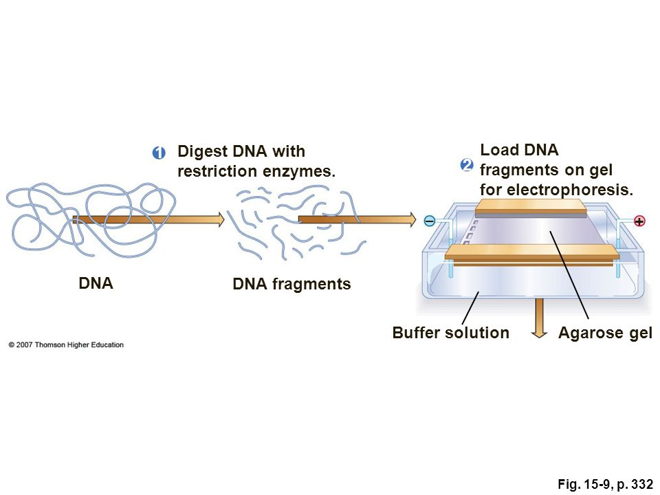 Dna Technology And Genomics Ppt Download