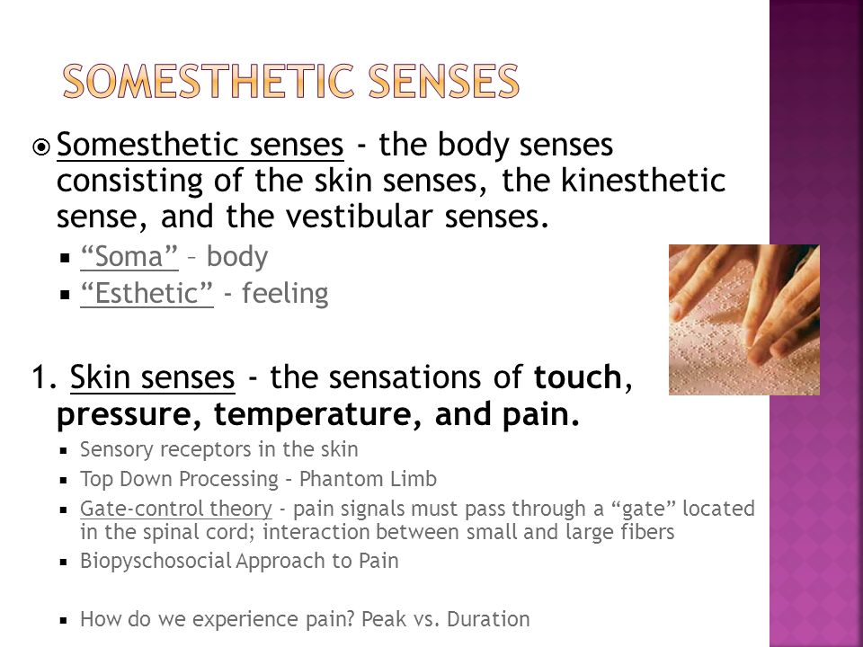 kinesthesis senses Otherimportantsenses module overview thismodule describes the senses oftouch, pain, taste, smell, and kinesthesis and the vestibular sense.
