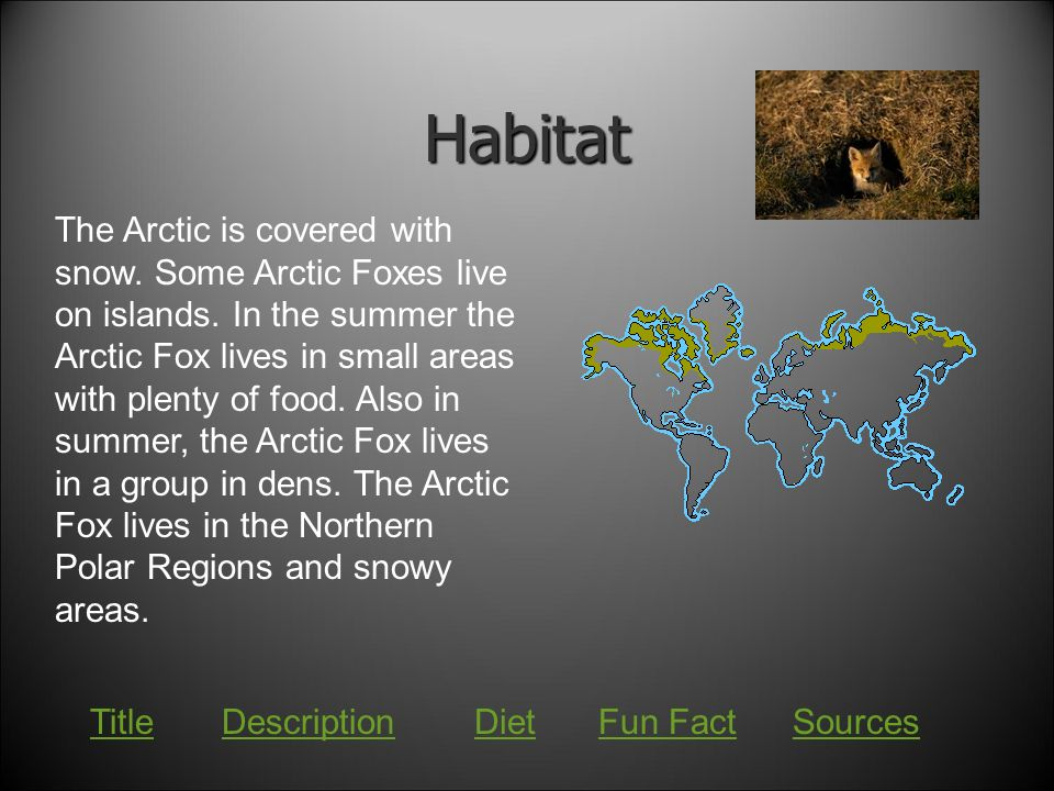 Arctic Fox Information