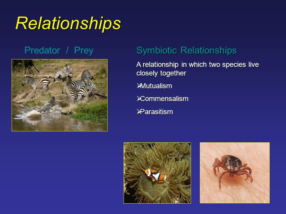 predator prey relationship in the taiga insects