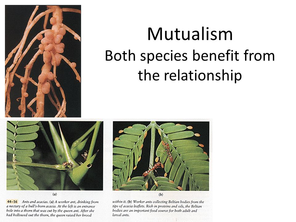 Mutualism Both species benefit from the relationship