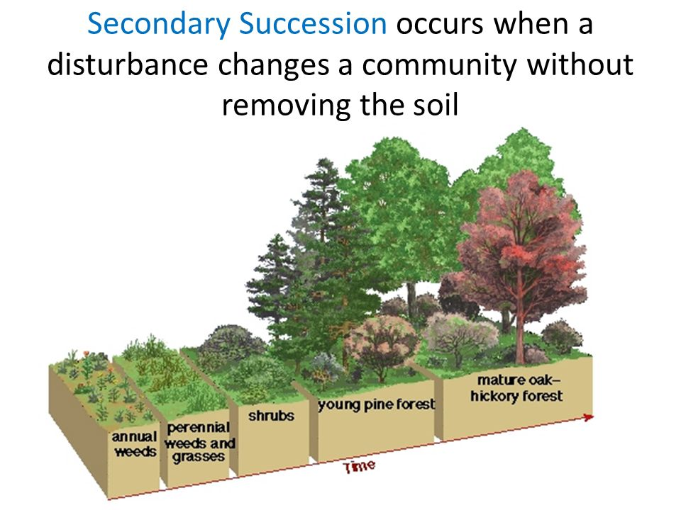 Secondary Succession occurs when a disturbance changes a community without removing the soil