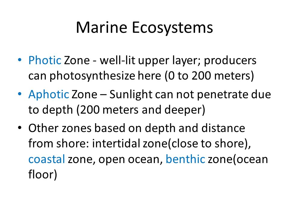 Marine Ecosystems Photic Zone - well-lit upper layer; producers can photosynthesize here (0 to 200 meters)
