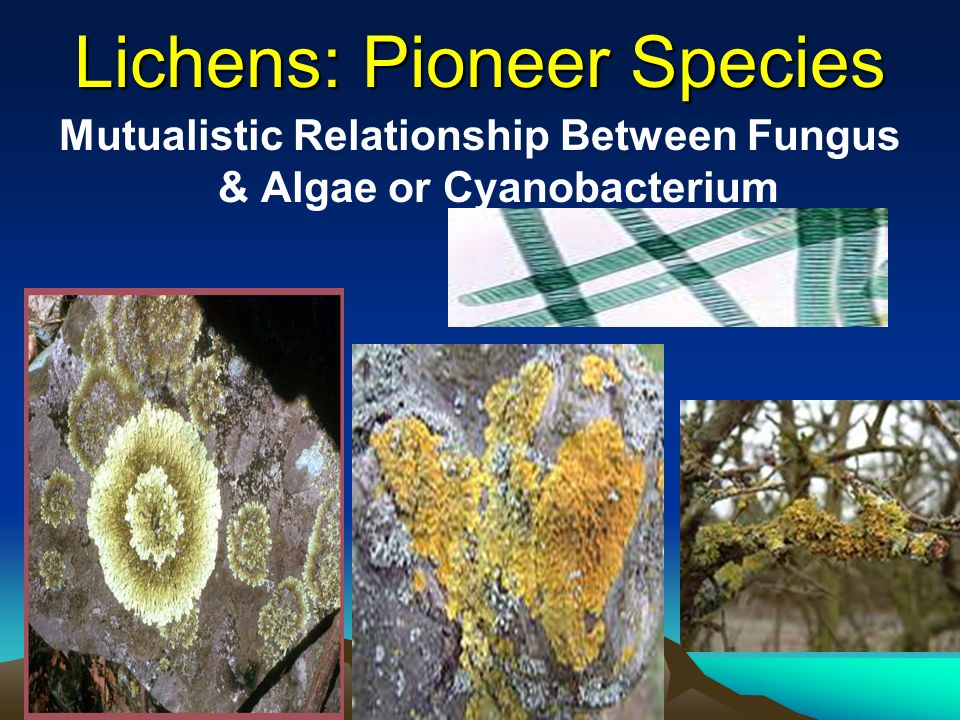 mutualistic relationship fungi and algae together form