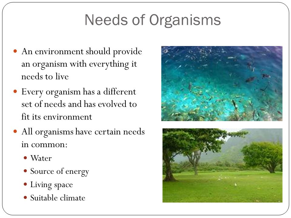 Needs of Organisms An environment should provide an organism with everything it needs to live.