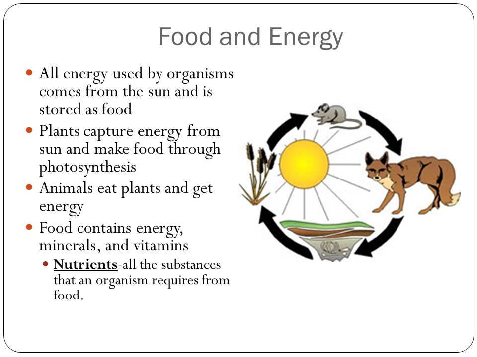 Food and Energy All energy used by organisms comes from the sun and is stored as food.