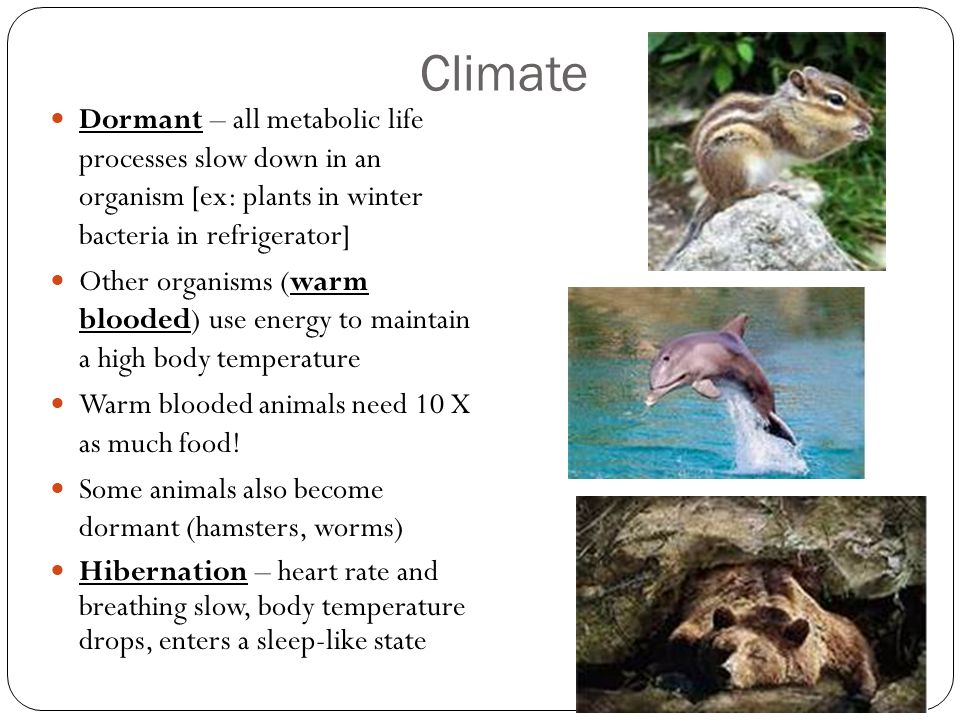 Climate Dormant – all metabolic life processes slow down in an organism [ex: plants in winter bacteria in refrigerator]