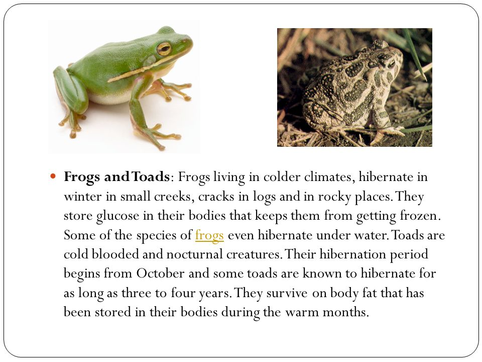 Frogs and Toads: Frogs living in colder climates, hibernate in winter in small creeks, cracks in logs and in rocky places.