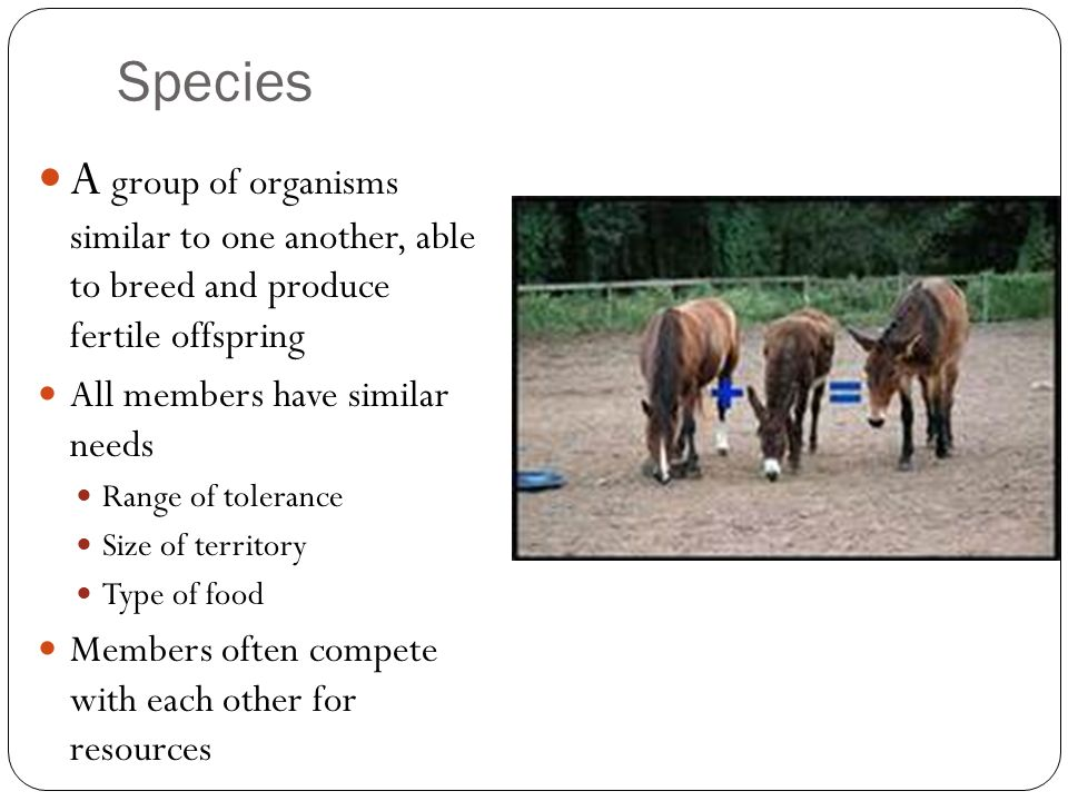 Species A group of organisms similar to one another, able to breed and produce fertile offspring.