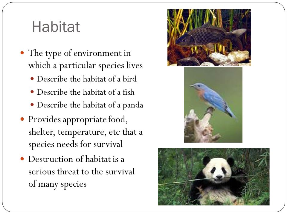 Habitat The type of environment in which a particular species lives