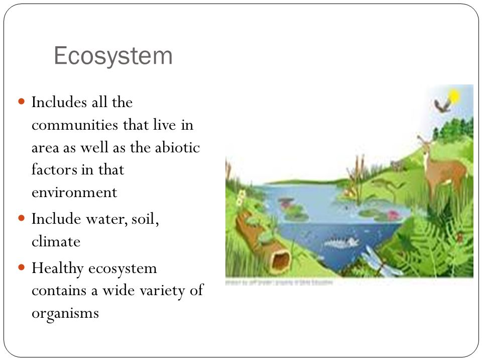 Ecosystem Includes all the communities that live in area as well as the abiotic factors in that environment.