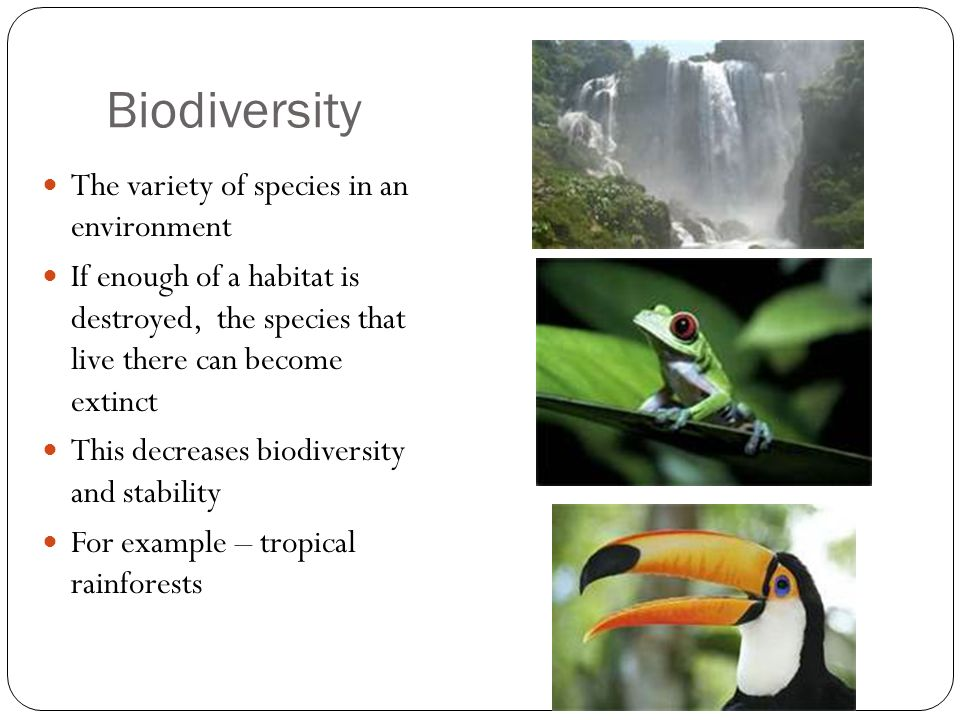 Biodiversity The variety of species in an environment