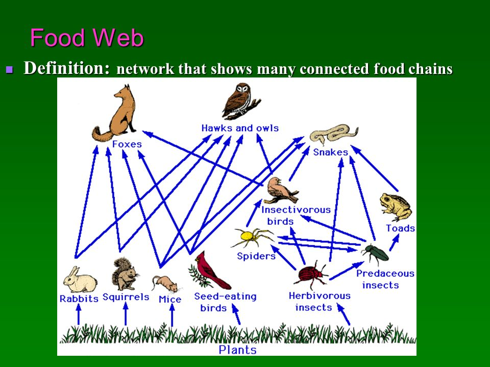 Ecosystems and Their Interactions - ppt video online download | 960 x 720 jpeg 106kB