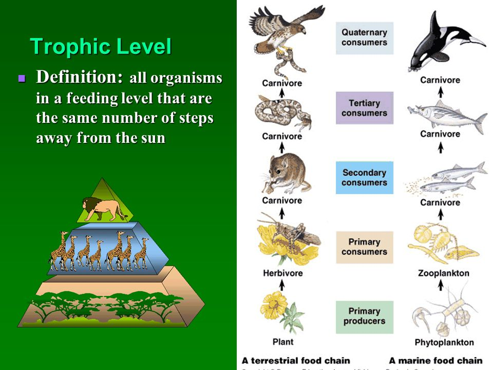 Ecosystems and Their Interactions - ppt video online download