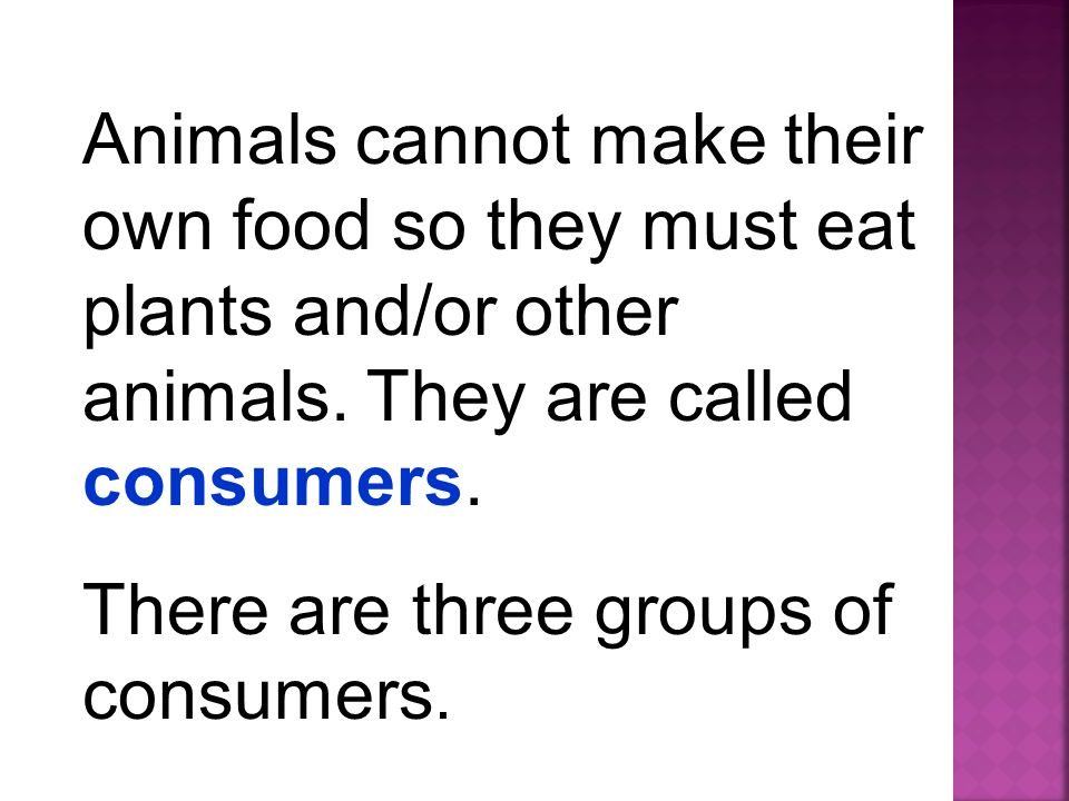 Animals cannot make their own food so they must eat plants and/or other animals. They are called consumers.