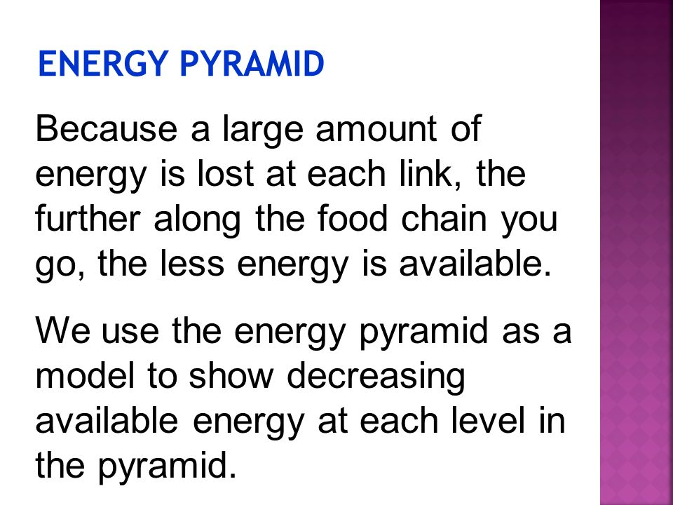 ENERGY PYRAMID Because a large amount of energy is lost at each link, the further along the food chain you go, the less energy is available.