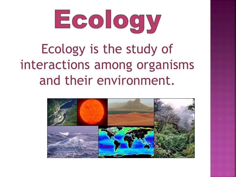 Ecology Ecology is the study of interactions among organisms and their environment.