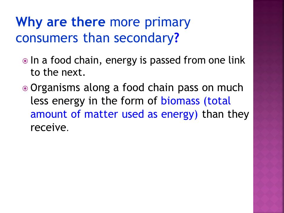 Why are there more primary consumers than secondary